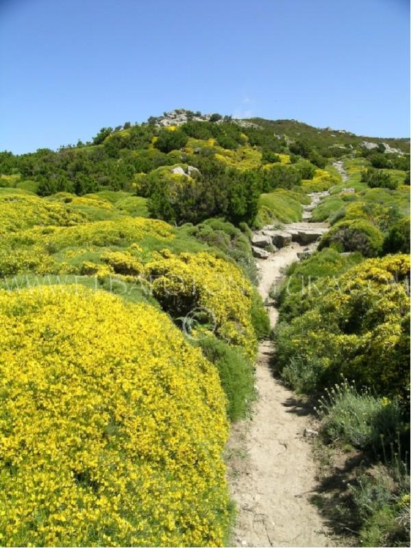 Escursioni Botaniche